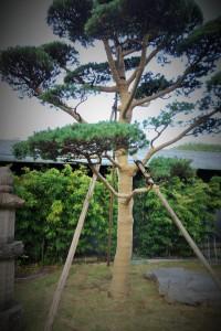Hakone and Oedo Onsen Monogatari 113