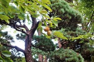 Hakone and Oedo Onsen Monogatari 159